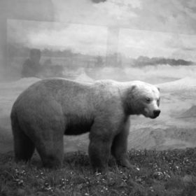 Illusion: brown bear