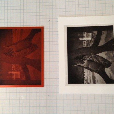polymer photogravure plate and print