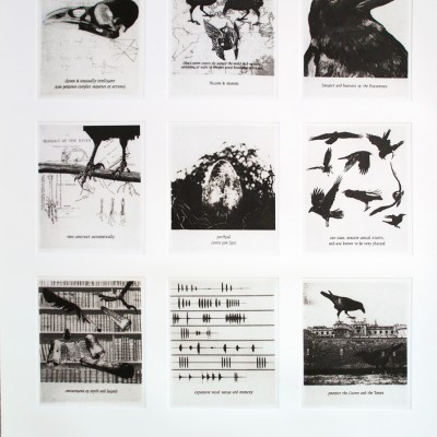corvus corax: 9 photogravure plates (polymer) on etching paper 19 x 27