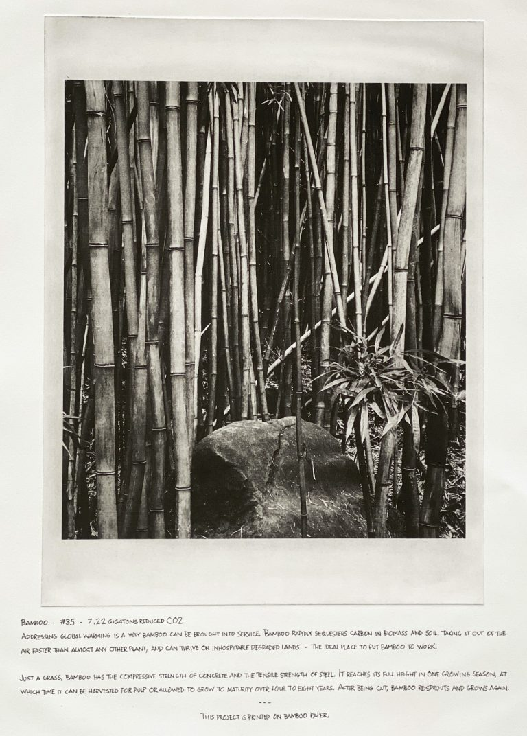 """""""Bamboo"""" 2020 Photogravure etching with written text 17"""" x 20.5"""" - Awagami Bamboo paper Edition of 5 --- Photo: Trace Nichols Text: Project Drawdown, Paul Hawken"""
